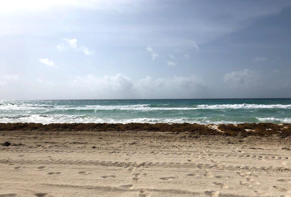 Cancun beach and seagrassum