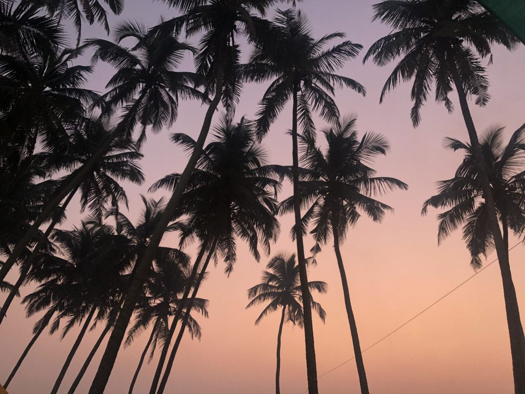 palm trees and sunset sky